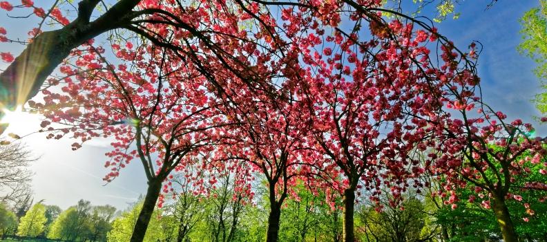 Chapitre 1- Un nouveau printemps
